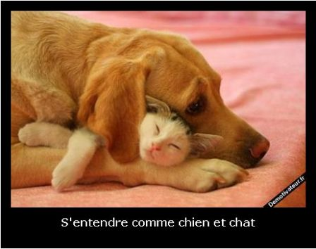 Animaux online le site du magazine 30 millions d 39 amis for Salon du chien et chat